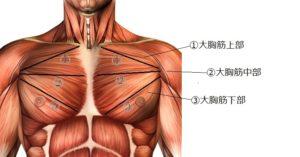 大胸筋 の上部 中部 下部