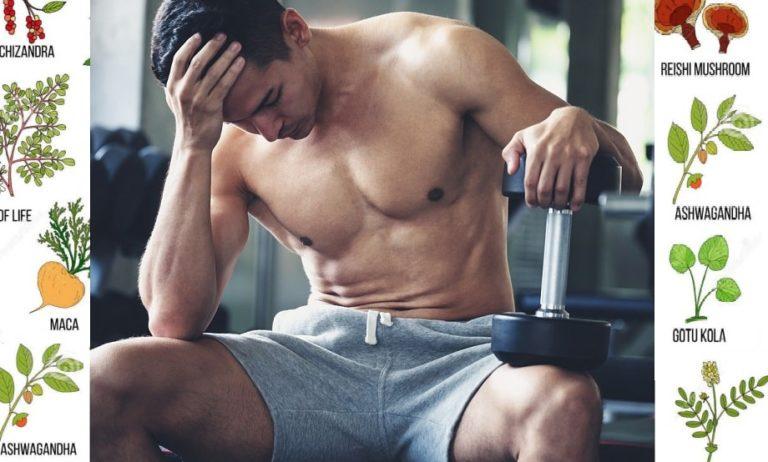 アダプトゲン |ストレス・精神疲労・肉体疲労に効果があるとされる天然ハーブ