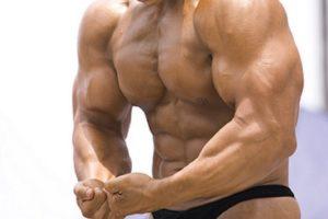 筋肉 は何日で落ちるか?|多忙でも筋肉を維持するテクニック